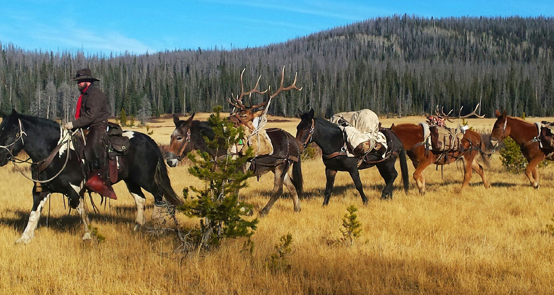 Colorado Outfitters – Colorado's best outfitters – hunting