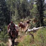 Wilderness Pack-in Horseback
