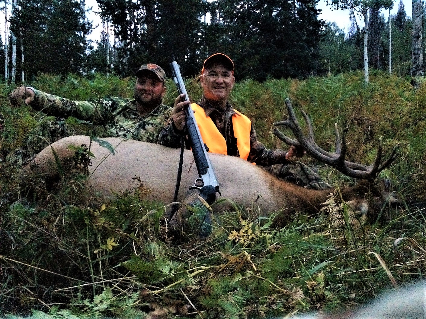 Elk Hunts – Colorado Outfitters