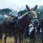 Elk-Mule 2018