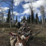 Packing Elk out 2018